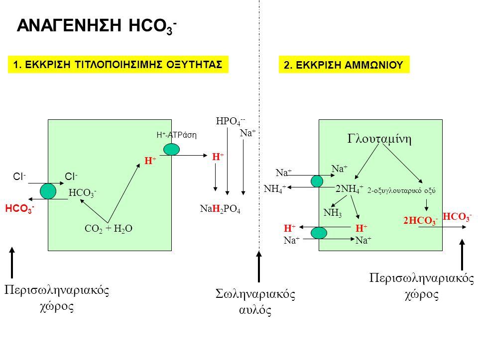 ΑΝΑΓΕΝΗΣΗ HCO3- Γλουταμίνη Περισωληναριακός χώρος Περισωληναριακός