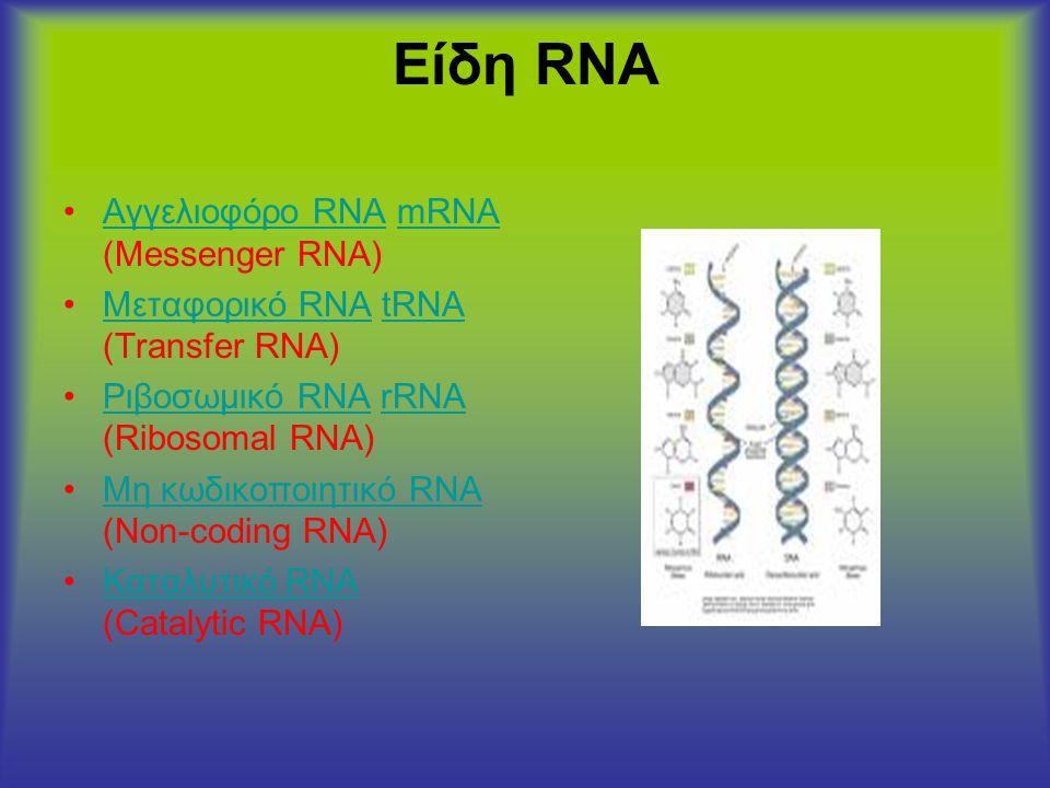 Είδη RNA Αγγελιοφόρο RNA mRNA (Messenger RNA)