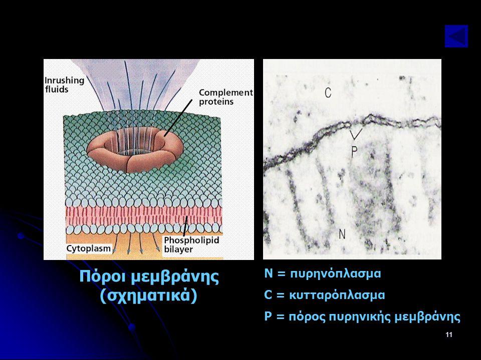 Πόροι μεμβράνης (σχηματικά)