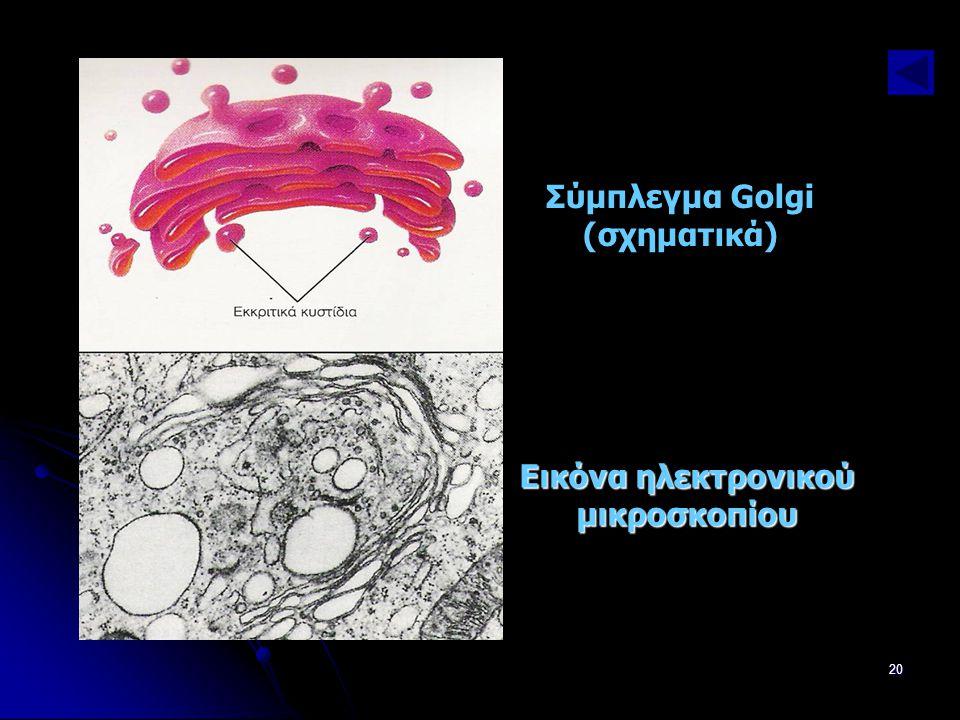 Σύμπλεγμα Golgi (σχηματικά) Εικόνα ηλεκτρονικού μικροσκοπίου