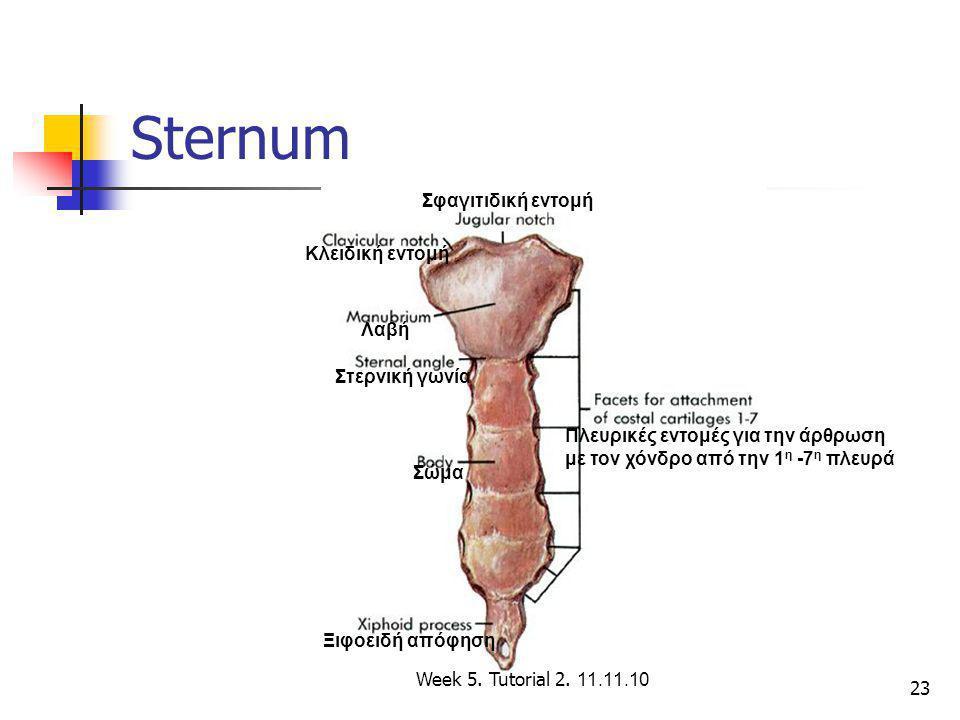 Sternum Σφαγιτιδική εντομή Κλειδική εντομή Λαβή Στερνική γωνία