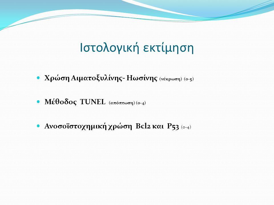Ιστολογική εκτίμηση Χρώση Αιματοξυλίνης- Ηωσίνης (νέκρωση) (0-5)