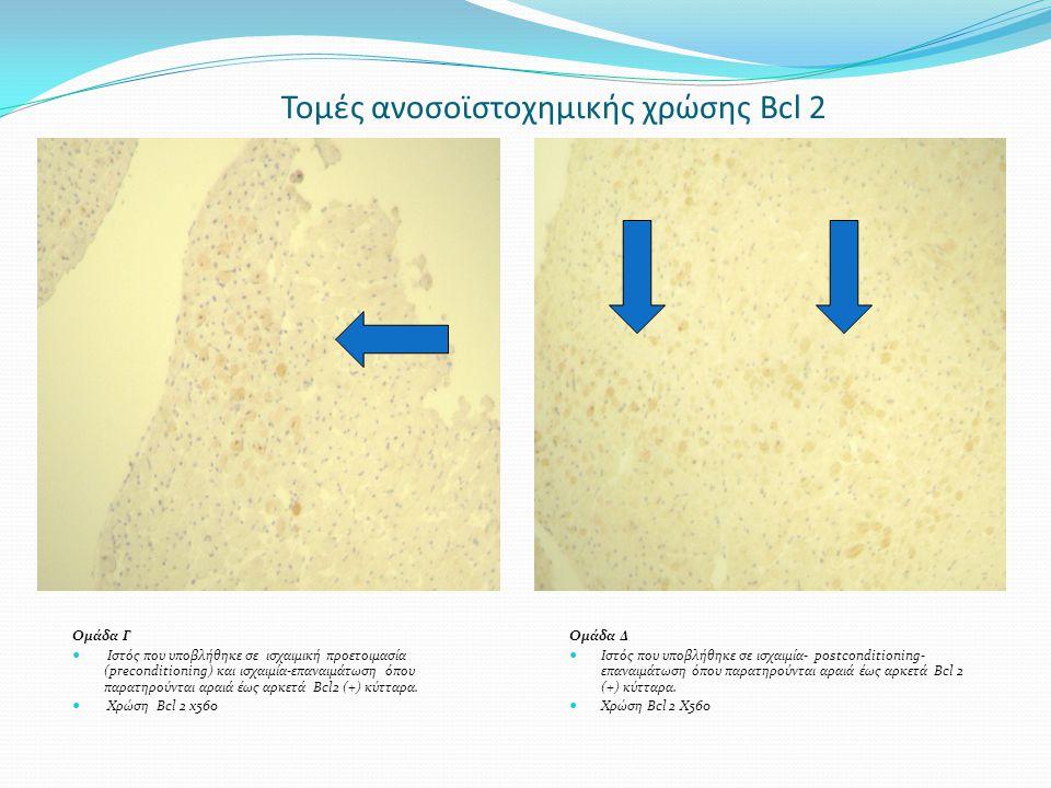 Τομές ανοσοϊστοχημικής χρώσης Bcl 2