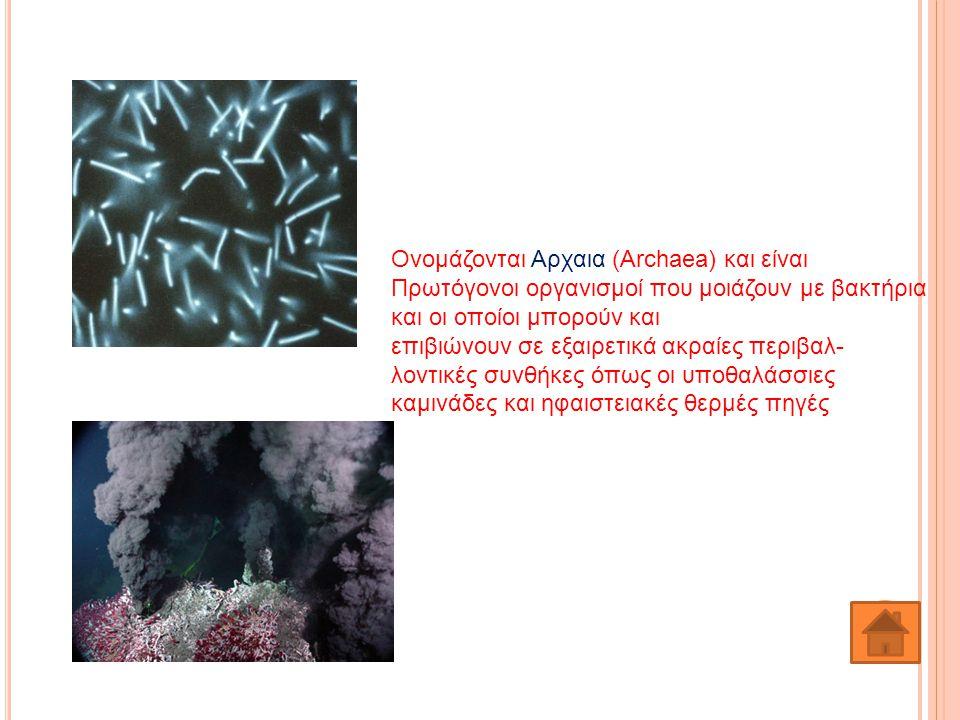 Ονομάζονται Αρχαια (Archaea) και είναι