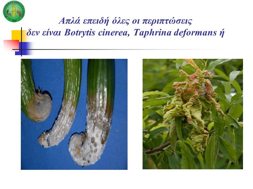 Απλά επειδή όλες οι περιπτώσεις δεν είναι Botrytis cinerea, Taphrina deformans ή