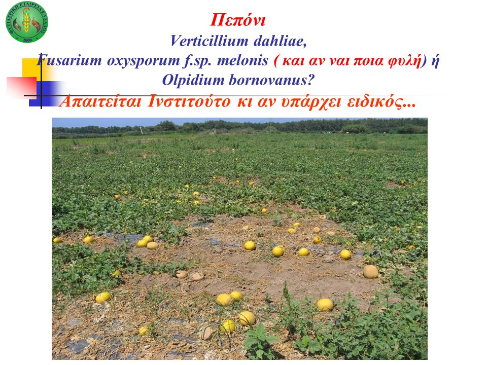 Πεπόνι Verticillium dahliae, Fusarium oxysporum f. sp