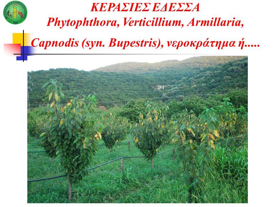 Phytophthora, Verticillium, Armillaria,