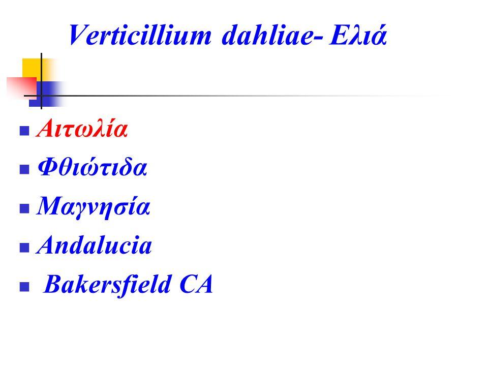 Verticillium dahliae- Ελιά