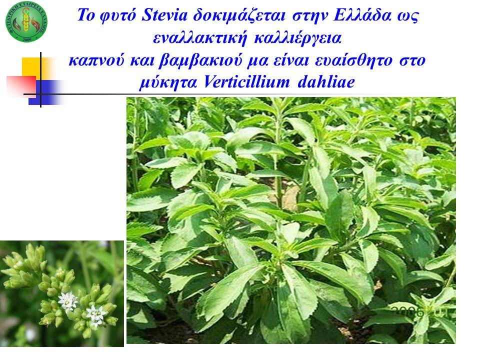 Το φυτό Stevia δοκιμάζεται στην Ελλάδα ως εναλλακτική καλλιέργεια