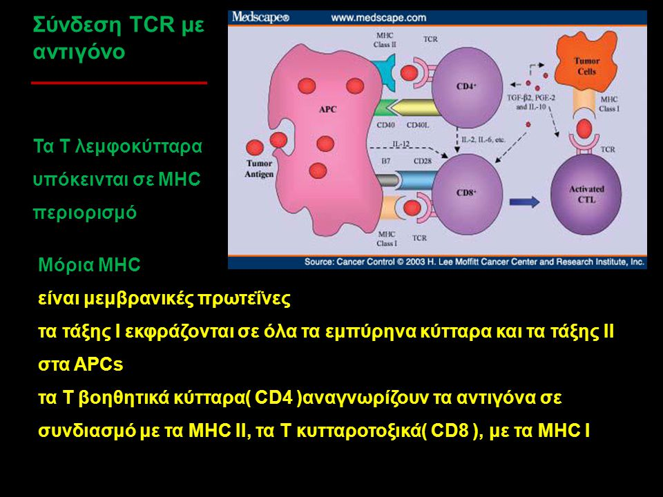 Σύνδεση TCR με αντιγόνο