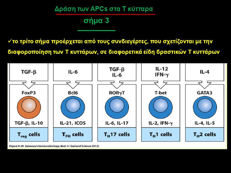 σήμα 3 Δράση των APCs στα Τ κύτταρα