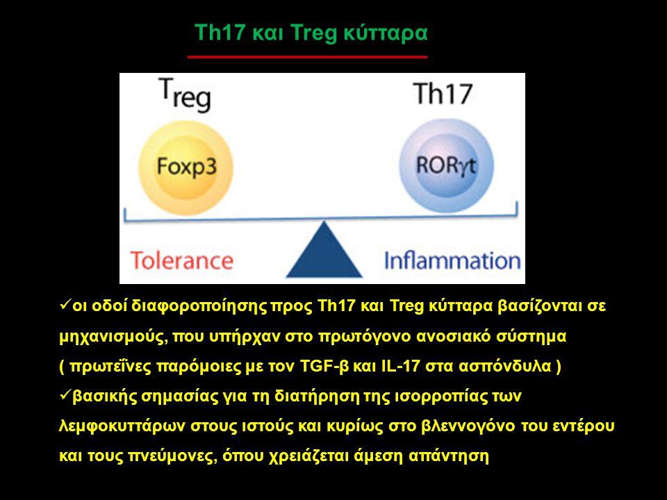 Th17 και Treg κύτταρα