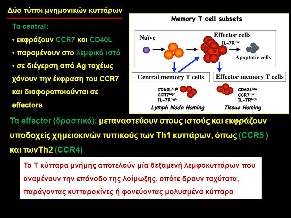 Δύο τύποι μνημονικών κυττάρων