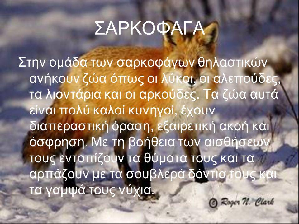 ΣΑΡΚΟΦΑΓΑ