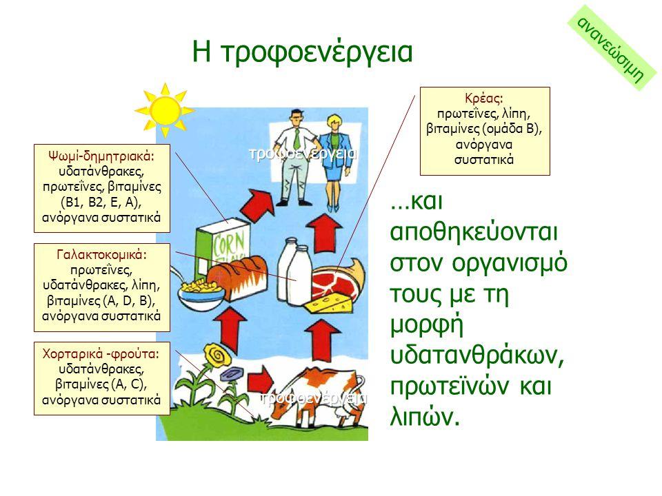 Η τροφοενέργεια …και αποθηκεύονται στον οργανισμό