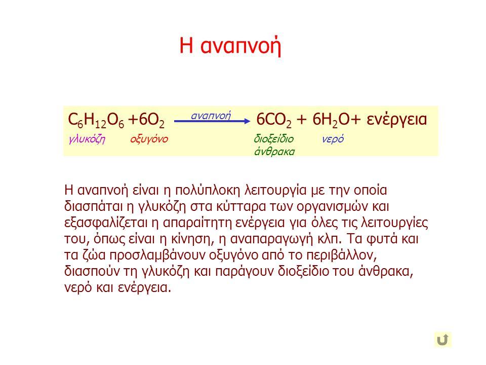 Η αναπνοή C6H12O6 +6O2 6CO2 + 6Η2O+ ενέργεια