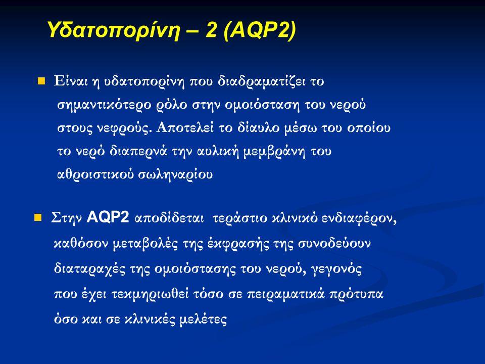 Υδατοπορίνη – 2 (AQP2) Είναι η υδατοπορίνη που διαδραματίζει το