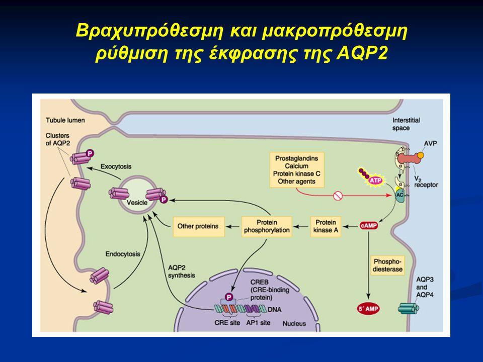 Βραχυπρόθεσμη και μακροπρόθεσμη ρύθμιση της έκφρασης της AQP2