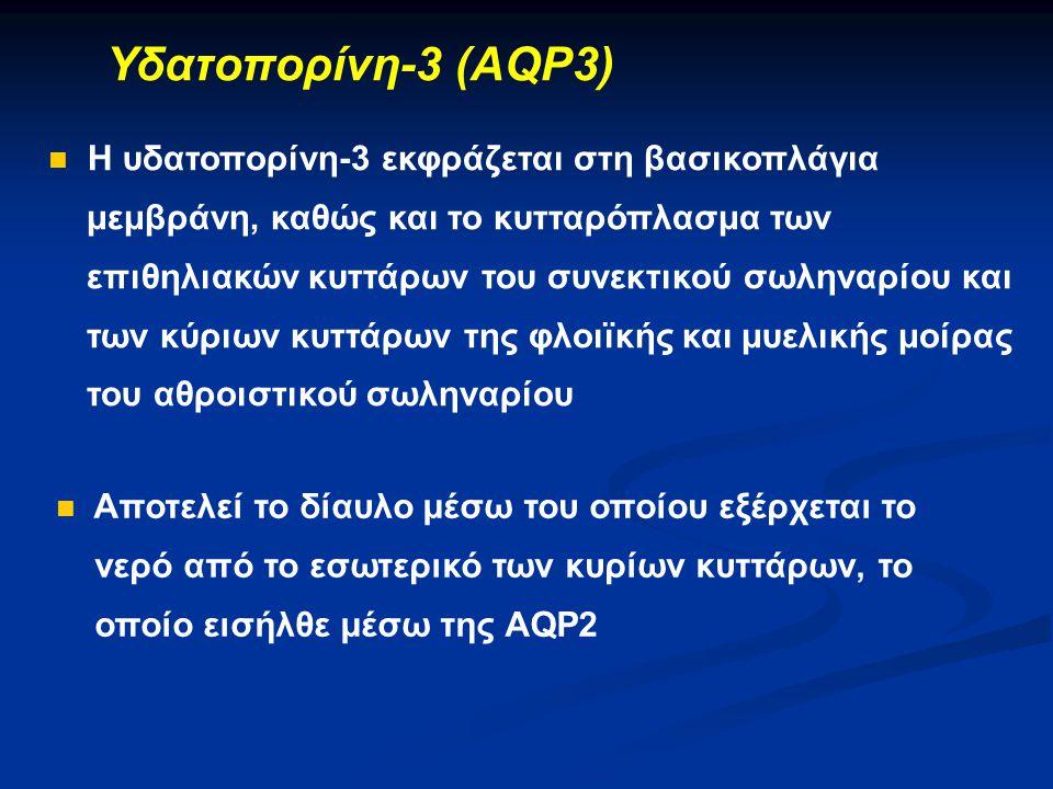 Υδατοπορίνη-3 (AQP3) H υδατοπορίνη-3 εκφράζεται στη βασικοπλάγια