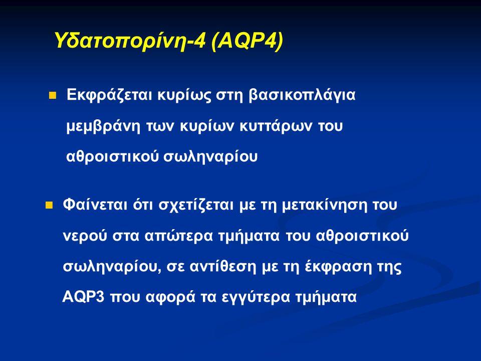 Υδατοπορίνη-4 (AQP4) Εκφράζεται κυρίως στη βασικοπλάγια