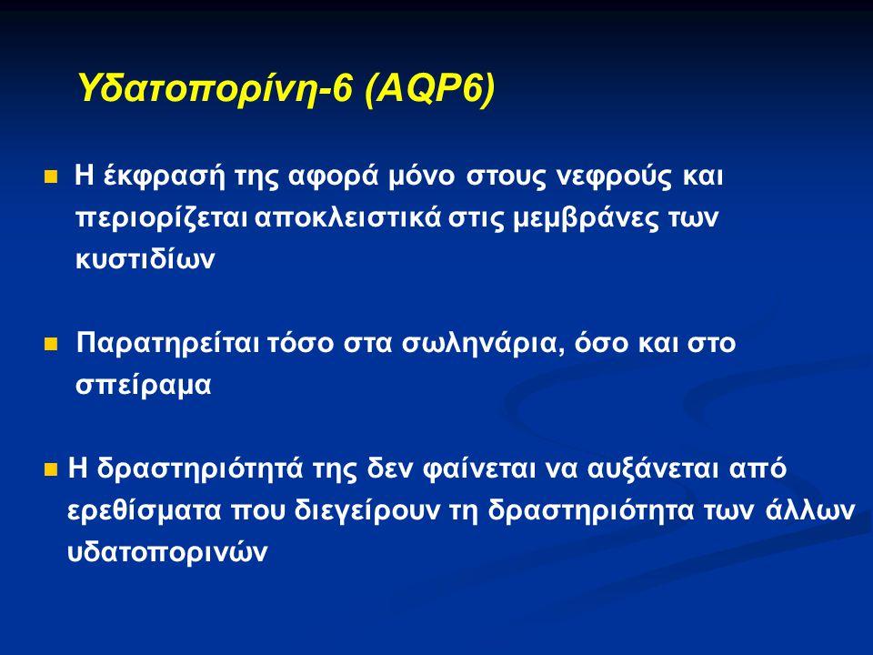 Υδατοπορίνη-6 (AQP6) Η έκφρασή της αφορά μόνο στους νεφρούς και
