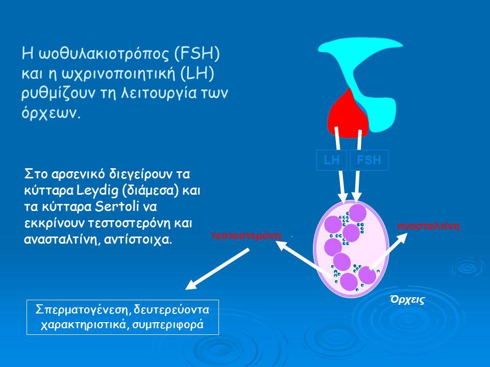 Σπερματογένεση, δευτερεύοντα χαρακτηριστικά, συμπεριφορά