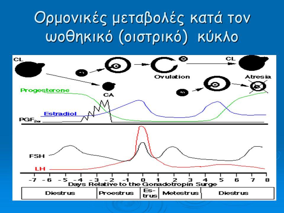 Ορμονικές μεταβολές κατά τον ωοθηκικό (οιστρικό) κύκλο