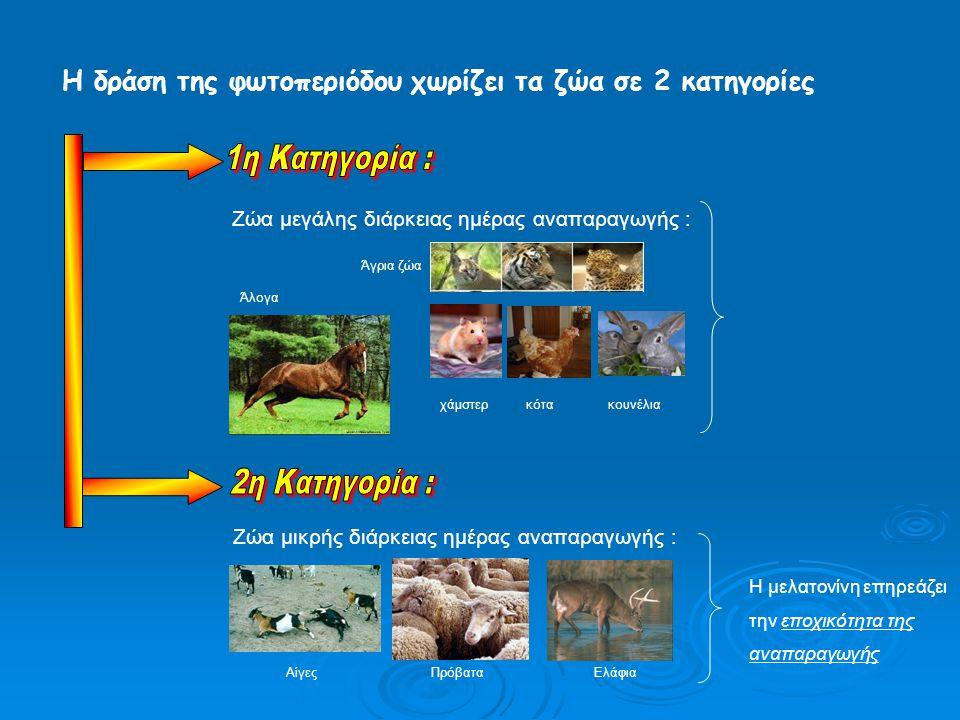 Η δράση της φωτοπεριόδου χωρίζει τα ζώα σε 2 κατηγορίες