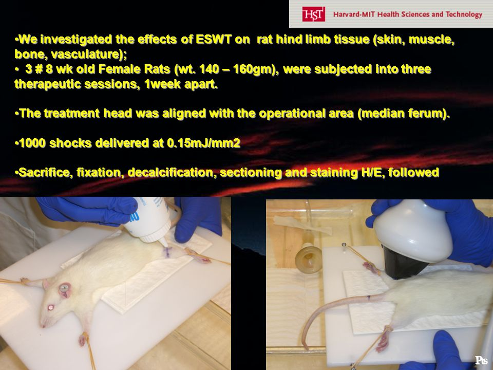 We investigated the effects of ESWT on rat hind limb tissue (skin, muscle, bone, vasculature);