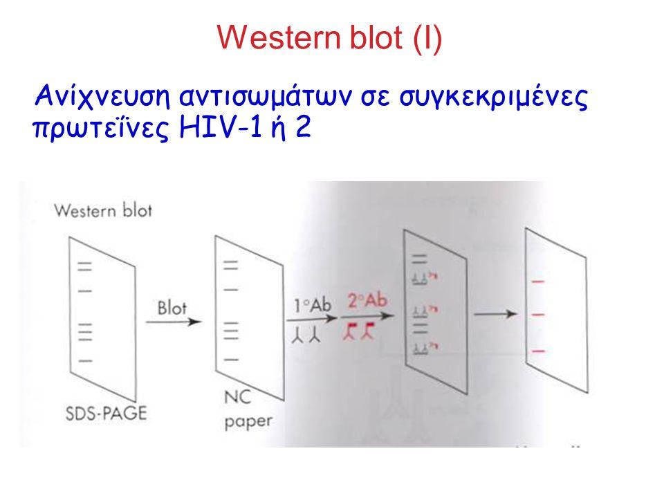 Western blot (I) Ανίχνευση αντισωμάτων σε συγκεκριμένες πρωτεΐνες HIV-1 ή 2