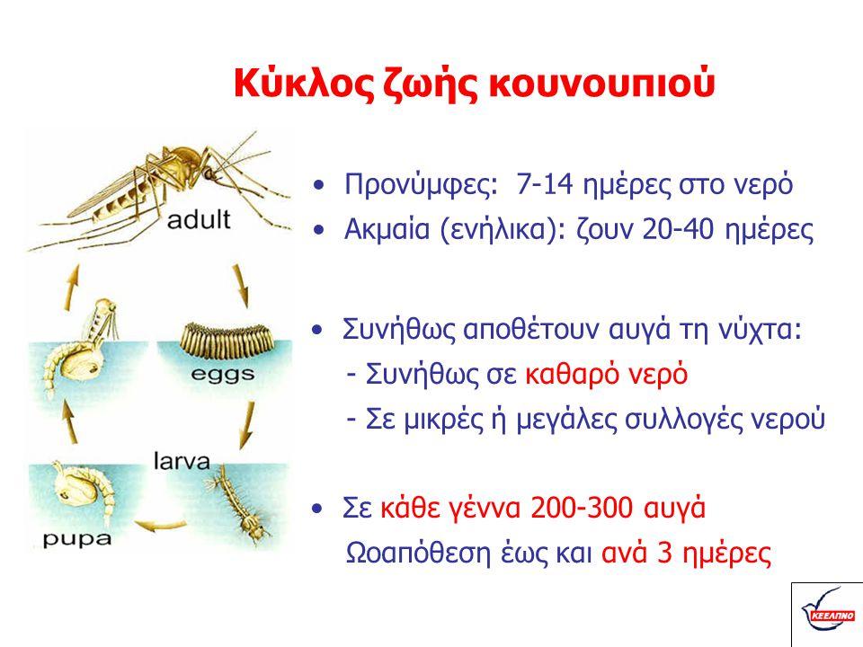 Κύκλος ζωής κουνουπιού