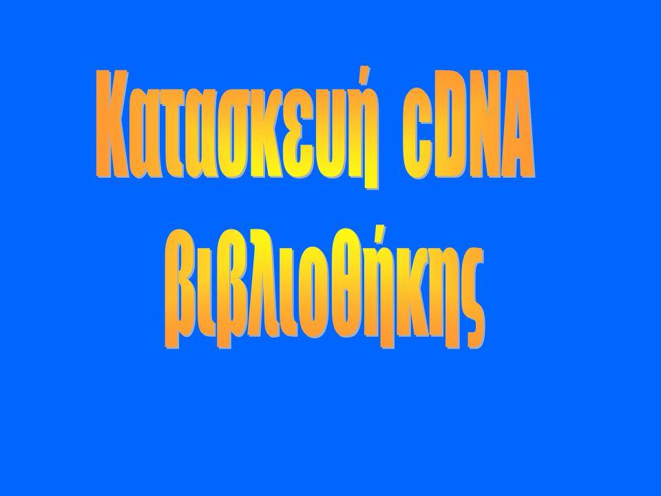 Κατασκευή cDNA βιβλιοθήκης