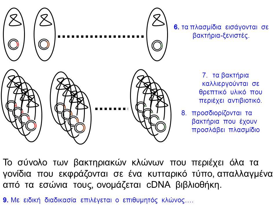 6. τα πλασμίδια εισάγονται σε βακτήρια-ξενιστές.