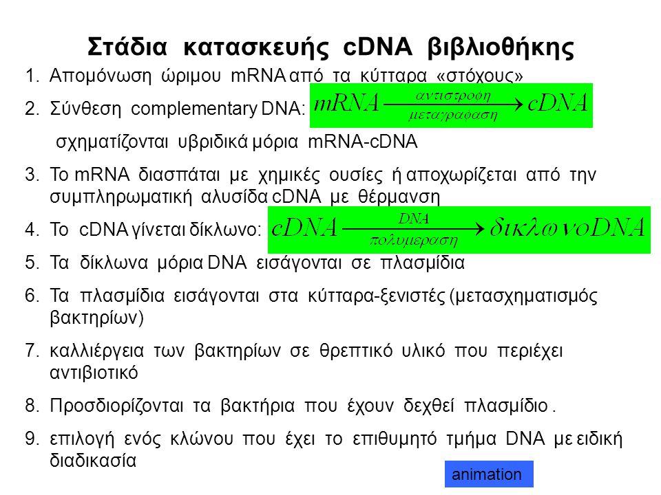 Στάδια κατασκευής cDNA βιβλιοθήκης
