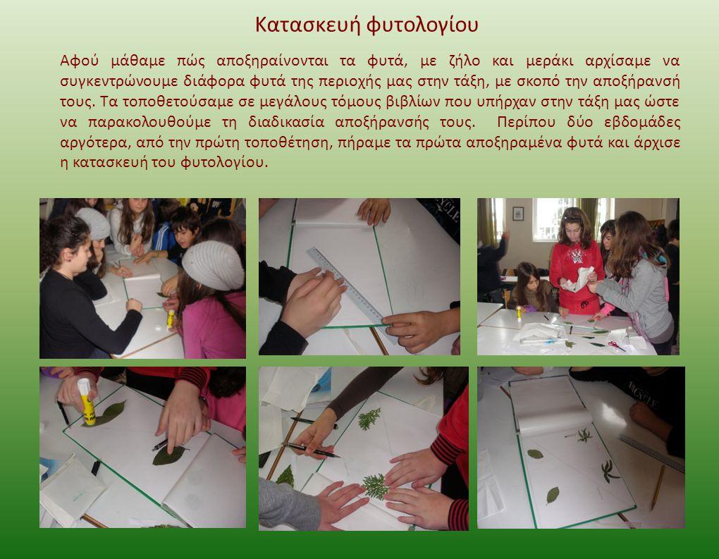 Κατασκευή φυτολογίου