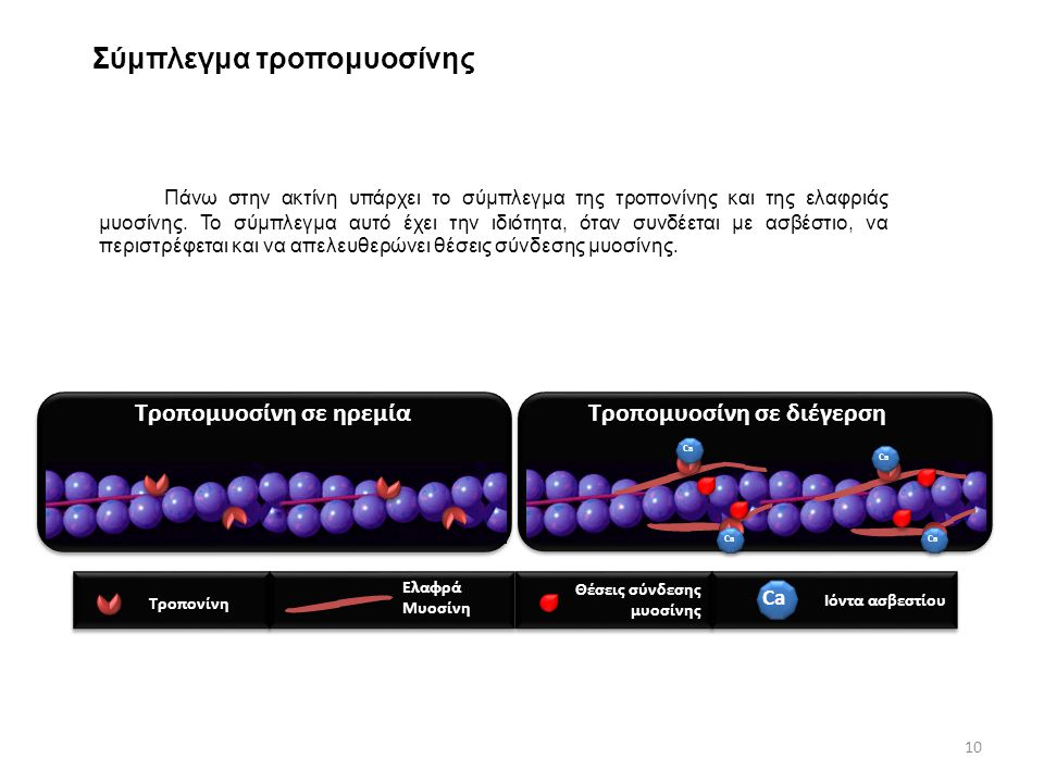 Σύμπλεγμα τροπομυοσίνης