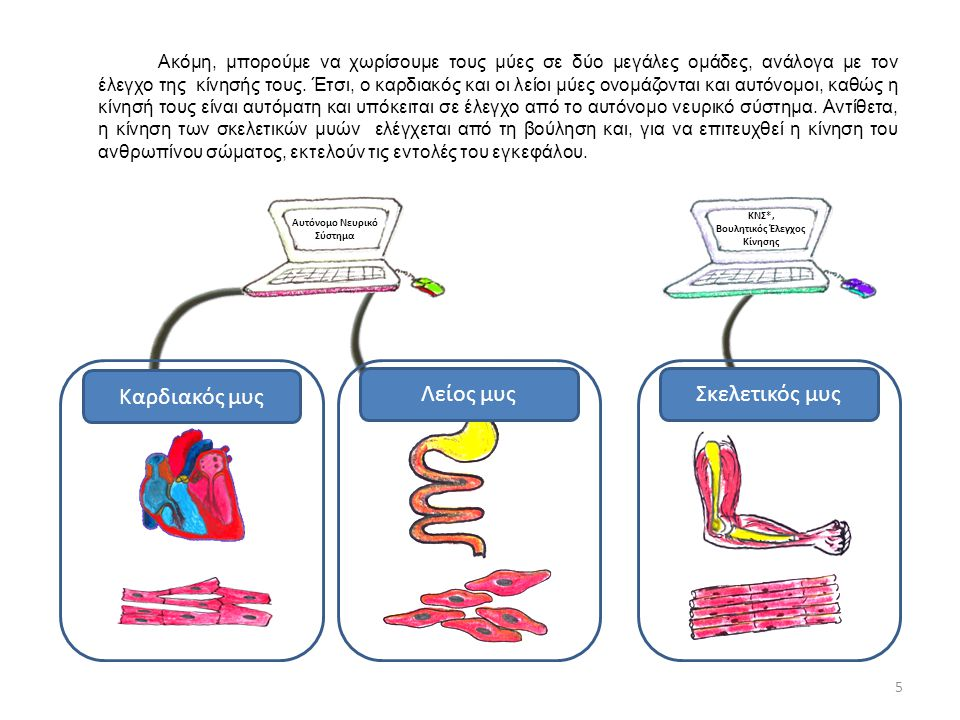 Αυτόνομο Νευρικό Σύστημα ΚΝΣ*, Βουλητικός Έλεγχος Κίνησης