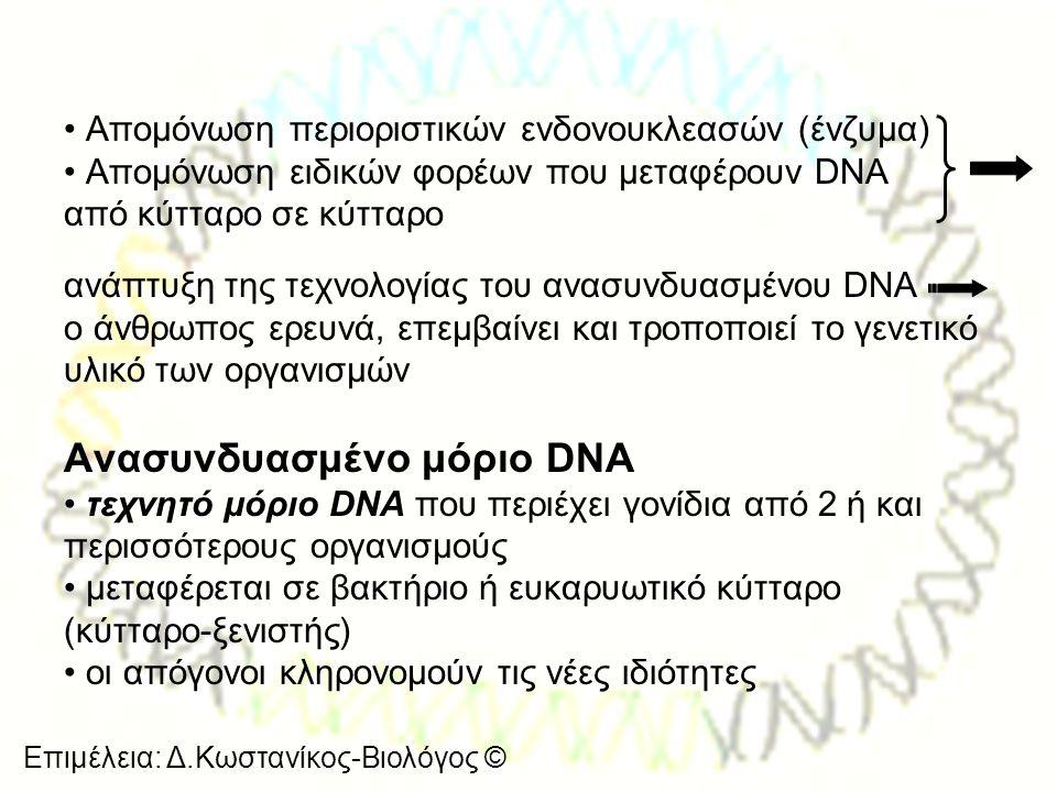 Ανασυνδυασμένο μόριο DNA