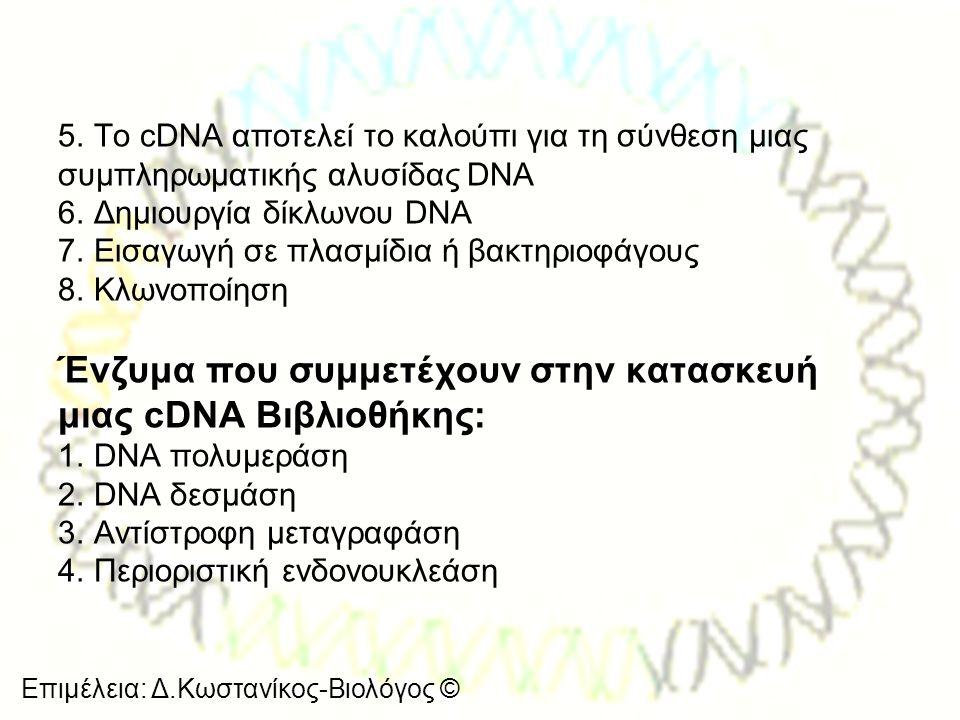 Ένζυμα που συμμετέχουν στην κατασκευή μιας cDNA Βιβλιοθήκης: