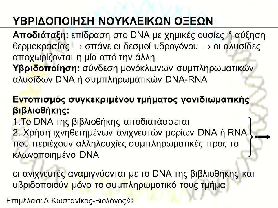 ΥΒΡΙΔΟΠΟΙΗΣΗ ΝΟΥΚΛΕΙΚΩΝ ΟΞΕΩΝ