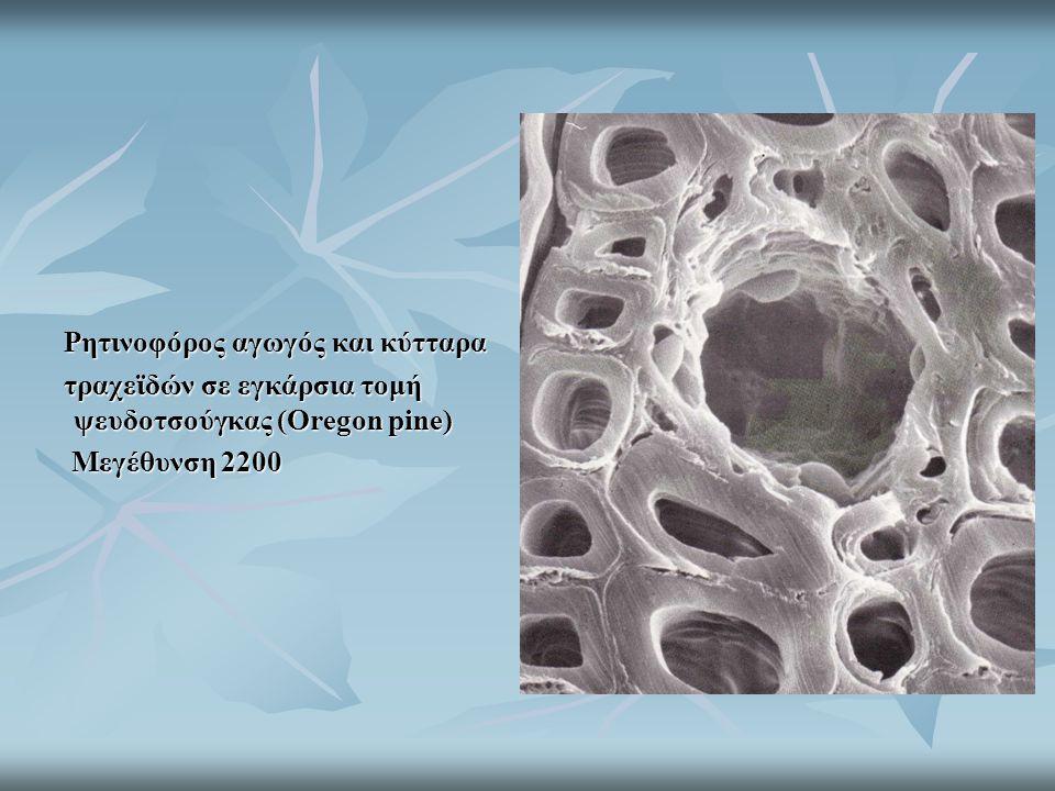Ρητινοφόρος αγωγός και κύτταρα