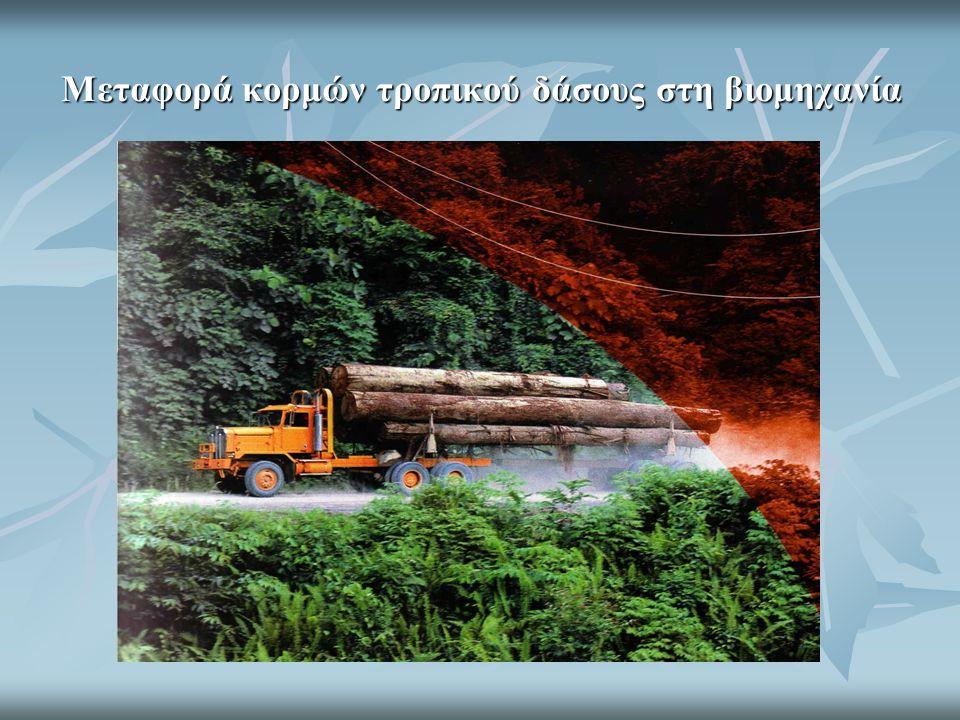 Μεταφορά κορμών τροπικού δάσους στη βιομηχανία