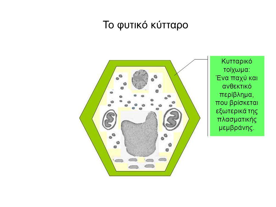 Το φυτικό κύτταρο Κυτταρικό τοίχωμα: Ένα παχύ και ανθεκτικό περίβλημα,