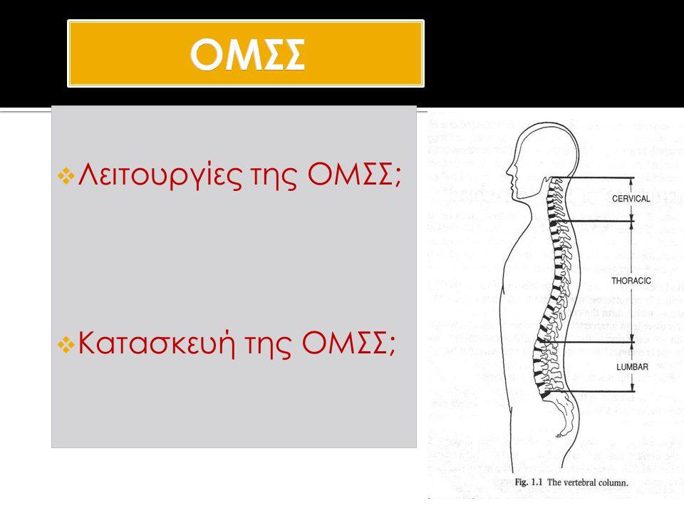 ΟΜΣΣ Λειτουργίες της ΟΜΣΣ; Κατασκευή της ΟΜΣΣ; Vertebral Column