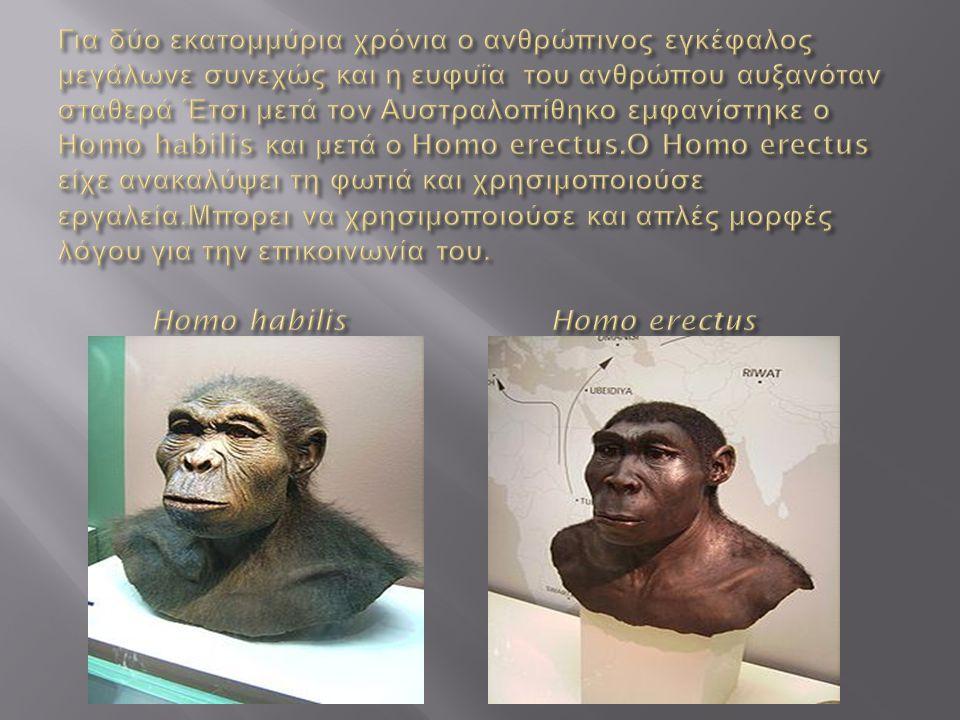 Για δύο εκατομμύρια χρόνια ο ανθρώπινος εγκέφαλος μεγάλωνε συνεχώς και η ευφυΐα του ανθρώπου αυξανόταν σταθερά Έτσι μετά τον Αυστραλοπίθηκο εμφανίστηκε ο Ηomo habilis και μετά ο Homo erectus.O Homo erectus είχε ανακαλύψει τη φωτιά και χρησιμοποιούσε εργαλεία.Μπορει να χρησιμοποιούσε και απλές μορφές λόγου για την επικοινωνία του.