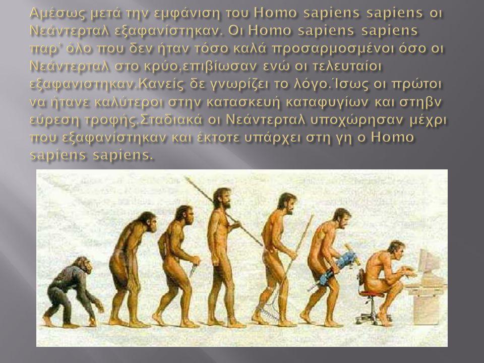 Αμέσως μετά την εμφάνιση του Homo sapiens sapiens οι Νεάντερταλ εξαφανίστηκαν.
