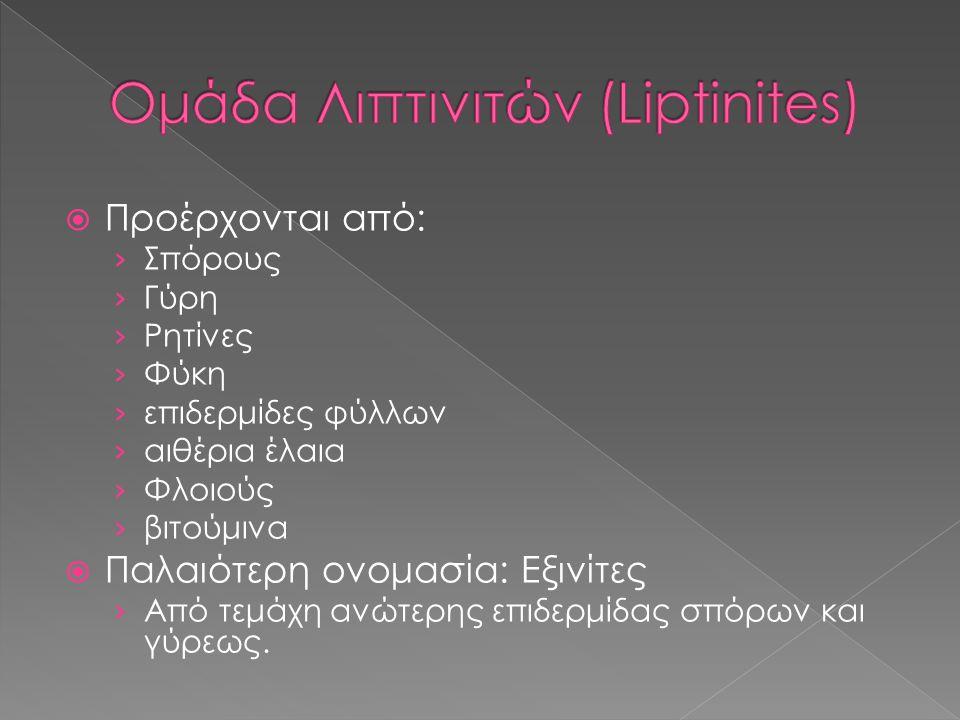 Ομάδα Λιπτινιτών (Liptinites)