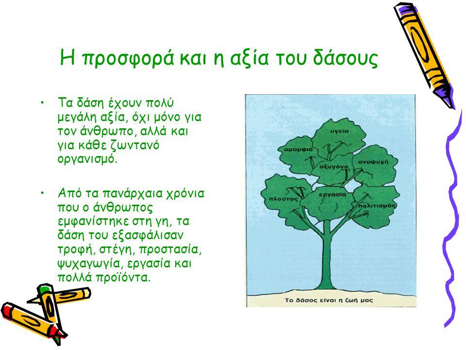 Η προσφορά και η αξία του δάσους