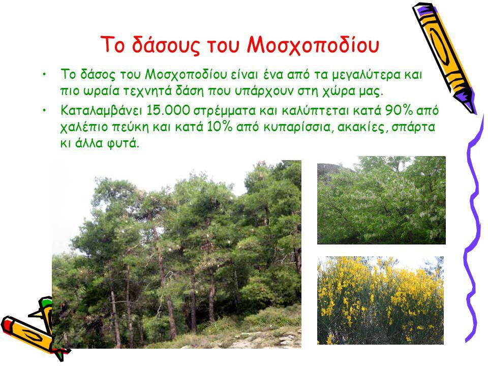 Το δάσους του Μοσχοποδίου