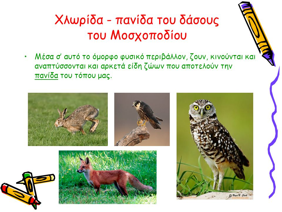 Χλωρίδα - πανίδα του δάσους του Μοσχοποδίου
